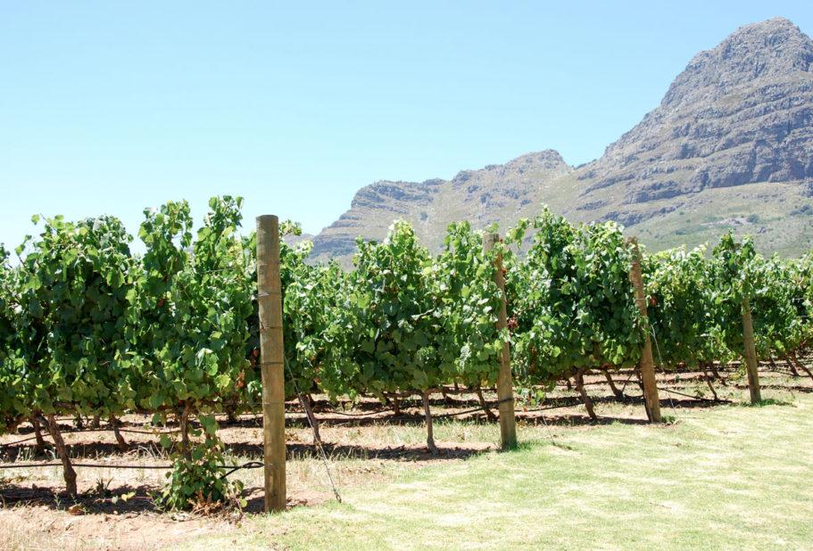 Uva Mira Sydafrika vingård